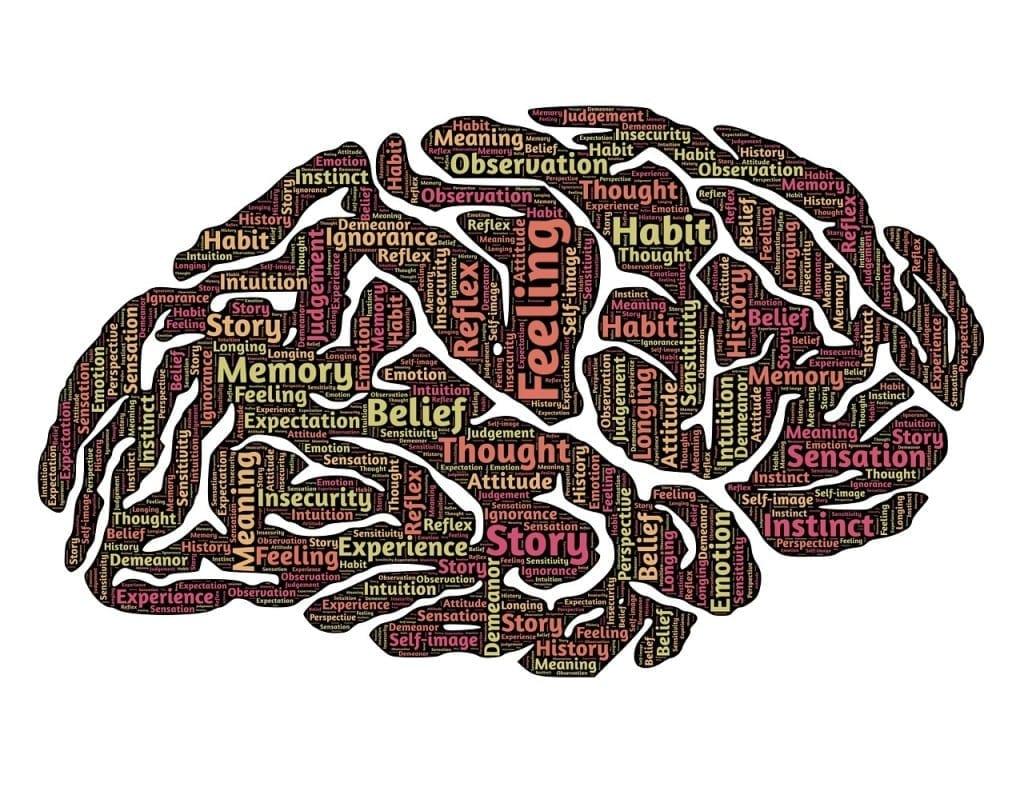 Gehirn px