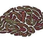 Neurowissenschaft belegt: Bilder entscheiden über Erfolg!